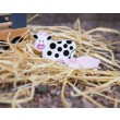 JaBaDaBaDo Tiertransporter - Holzspielzeug Profi